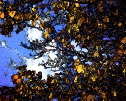 leaves-clouds